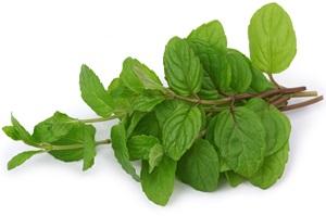 Laskavec – amarant: Pěstování, účinky, použití