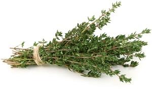Tymián: Pěstování, účinky, použití