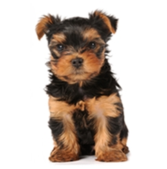 Poplatky za psa 2017