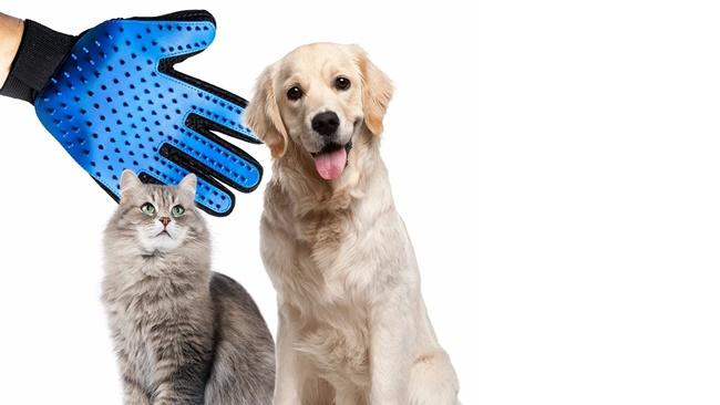 Tipy z Aliexpressu: 11 tipů na levné doplňky pro psy